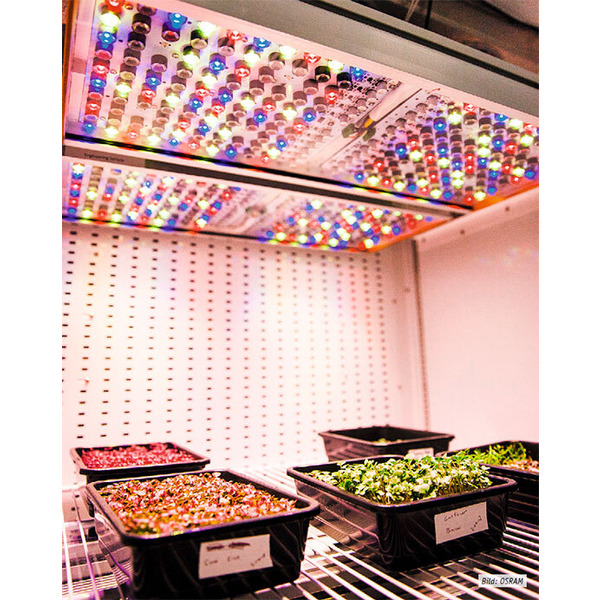 Genau das richtige Licht - Intelligente LED-Technik für Pflanzen und Tiere